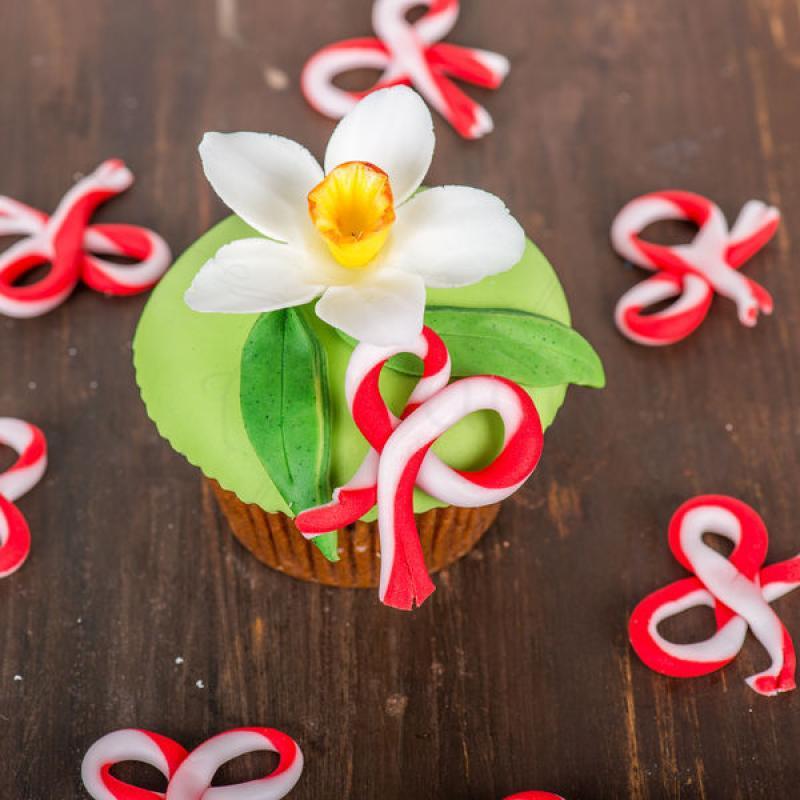 Cupcake Narcisa Primavara